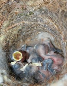 Six Beautiful Babies