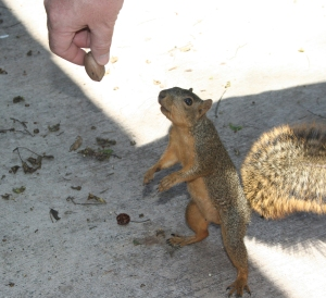 Do you want a pecan?