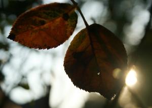 Sunrise - 09-25-08