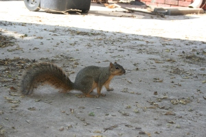 Original Squirrel Photo - Lucy